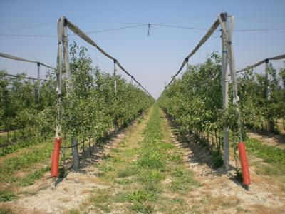 Italijani zainteresovani za proizvodnju sadnica u vrnjackoj banji
